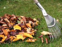 Leafs clean up,gardening service