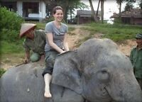 Elephant conservation in Indonesia