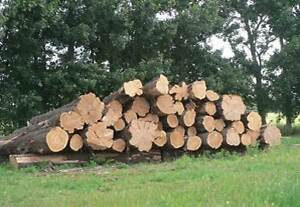Macrocarpa, English Elm, English Oak & Walnut Logs wanted to buy Deloraine Meander Valley Preview