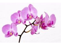 THAI ORCHID Massage & Spa. - Will be closed for annual holiday March 28 - May 5.