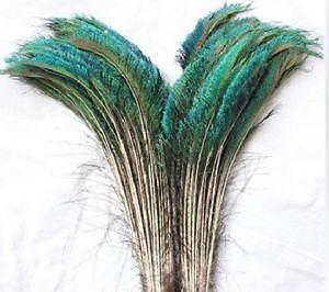Peacock Feathers | eBay