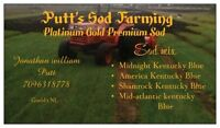 Kentucky blue grass platinum gold also have feild sods