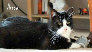 "MEET AWESOME ""ARROW""....SWEET & CUDDLY GUY 9 MO. FIXED/SHOTS"