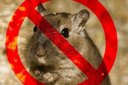 Sydney Pest Control -Rodent treatments
