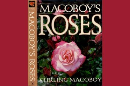 Macaboy's Roses  by Stirling Macaboy - Hardcover - Out of Print