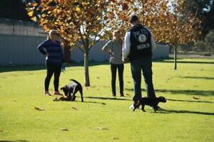 Perth's Number One Dog Training - West Coast Pet Care Centre