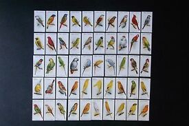 A collection of cigarette cards in a frame.