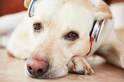 (Please, don't actually put headphones on your dog!)
