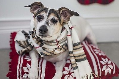 What A Comfy Winter Dog!