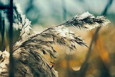 Umrahme den wunderschönen Frost