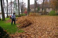Fall Leaf Clean Up. Overgrown Yards Makeovers. Lawn Mowing