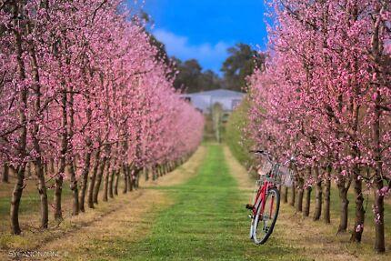Blossom open day..