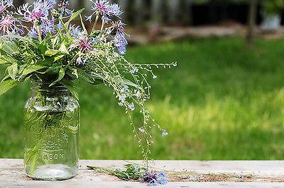 Präsentiere Deine Blumen - und Dein Unkraut