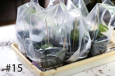 15. Bambusspieße & Essstäbchen