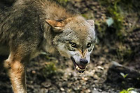 Coyote Problems?