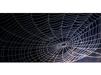Crystal Spider Web on Glossy Black large canvas