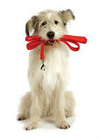 Dog Walking Services in the village of Colchester