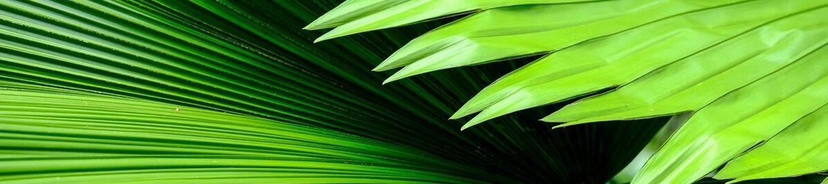 pflanzen-versand