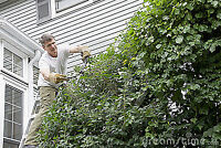 Arborists  Services Moes Residenetal  Serrvice