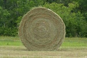 Large Round Hay Bales for sale – 4' x 5'