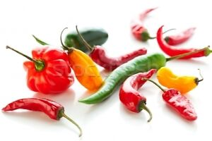PEPPER HOT CHILLI MIXED TYPES  VEGETABLE SEED  COUNTRY VAL  SEEDS 1 PACKET