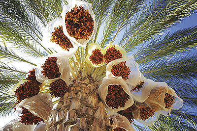 SAHARA FOOD AND ART