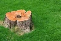 Affordable Stump Grinding for you