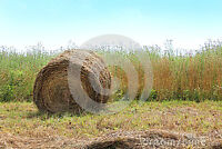 ORGANIC/NATIVE/NATURAL HAY for SALE