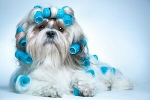 SEEKING PROFESSIONAL DOG GROOMER (PET STYLIST)