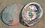 abalone2000