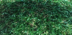 Paws Dog Artificial Grass Antibacterial Mesh Backing 5m x 4m NEW