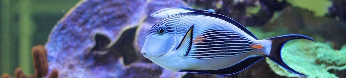 aquaPro2000 - Aquaristik & Teich