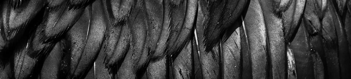 Black Raven Design Limited