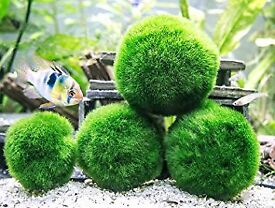 MOSS BALLS TROPICAL FISH AQUARIUM