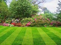 local gardener offering services