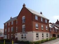 2 Bed En-suite Apartment TO LET in Hamilton area