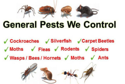 Pest control treatment 24/7 from $90