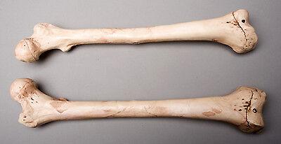 Halloween Horror Aged Femur Bones, Life-Size Human Skeleton, Left & Right, NEW](Halloween Skeletons Life Size)
