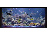 Fish Aquarium Tank Maintenance Service - professional service