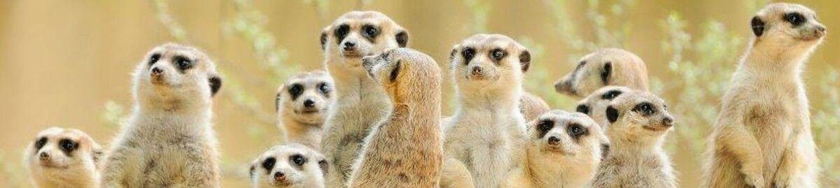 Super*Meerkat
