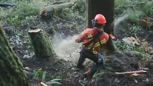 Chainsaw Operator/ Timber Construction Comox / Courtenay / Cumberland Comox Valley Area image 1