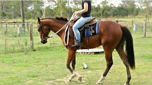 Learn Natural Horsemanship Burpengary Caboolture Area Preview