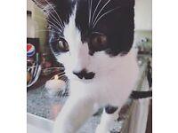 Missing cat in Belton