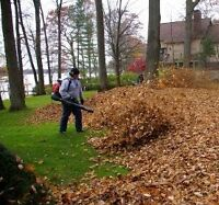 Leaf clean up! Best prices in town guaranteed/same day service