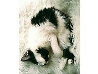 Kittens for sale £50.