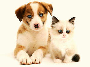 Trusted and experienced House / Pet sitter Paddington Eastern Suburbs Preview