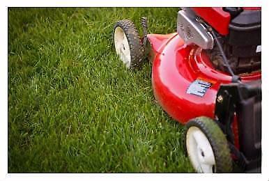 cheap grass cutting