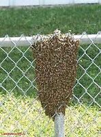 Bee Swarm Removal  free of charge.PLEASE  HELP US SAVE THE BEES!