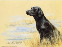 Framed Black Labrador Dog Print - Limited Edition by Gill Evans