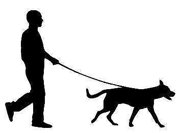 Experienced & qualified dog walker